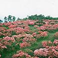高柴山(福島県)