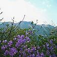 伊豆ヶ岳(埼玉県)
